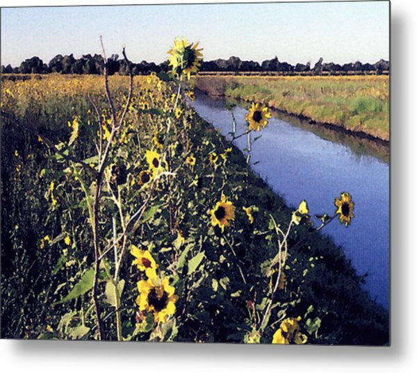 Sunflower Canal Metal Print by Eunice Olson