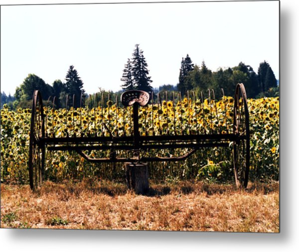 Sunflower Farm Scene Metal Print