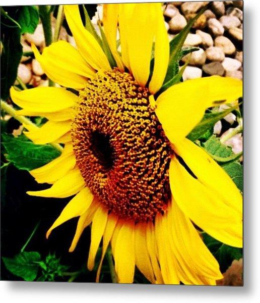 #sunflower #flower #sun #yellow #green Metal Print