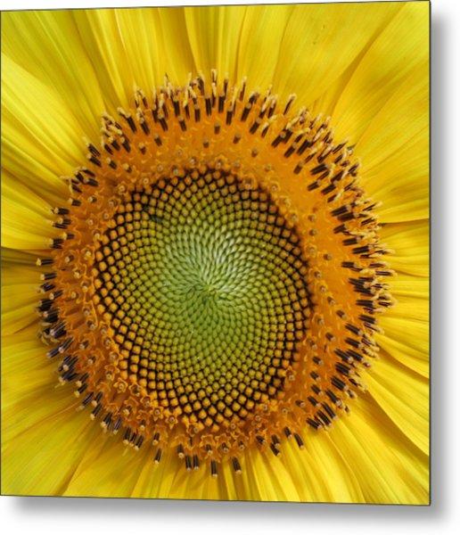 Sunflower Magic Metal Print