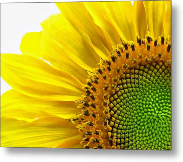Sunflower Segments Metal Print