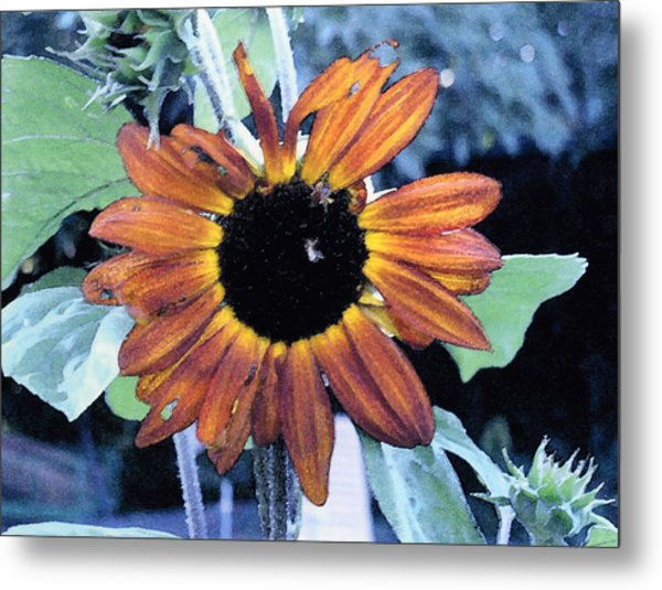 Sunflower With Bee Metal Print by Eunice Olson