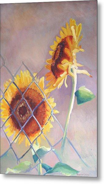 Sunflowers Fenced Metal Print