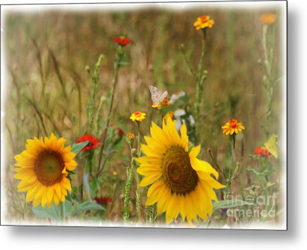Sunflowers In  The  Wild  Metal Print