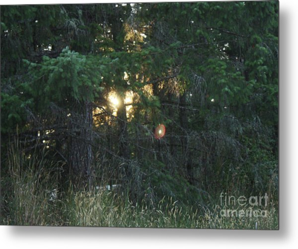 Sunlight Orbs Metal Print by Jane Whyte