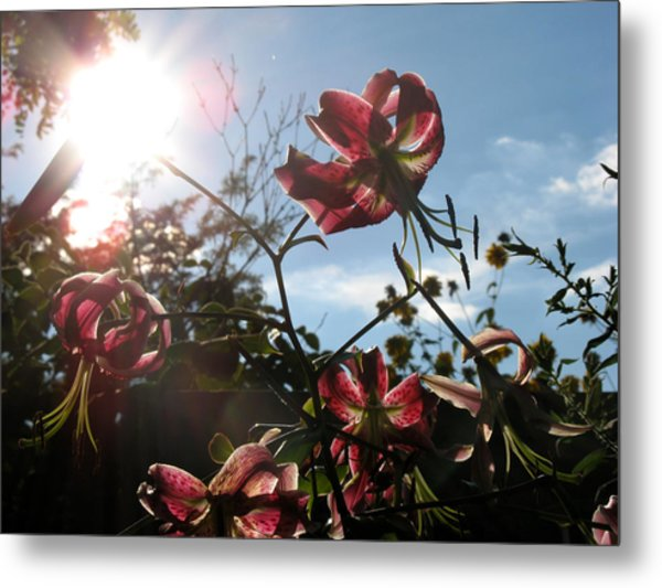 Sunlight Through Flowers Metal Print