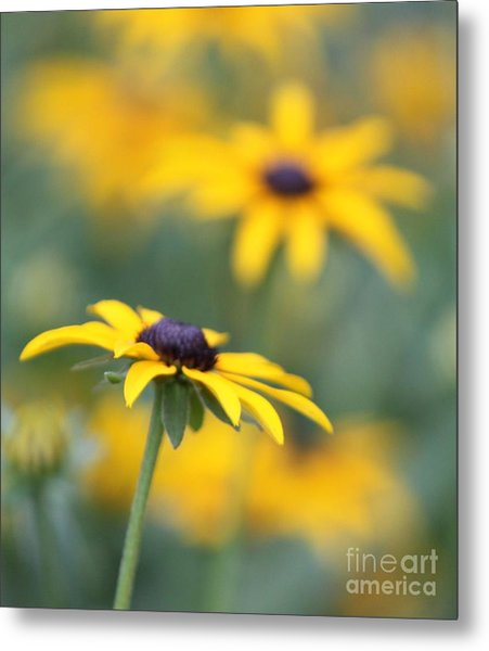 Sunny Flower Metal Print by Marilyn West