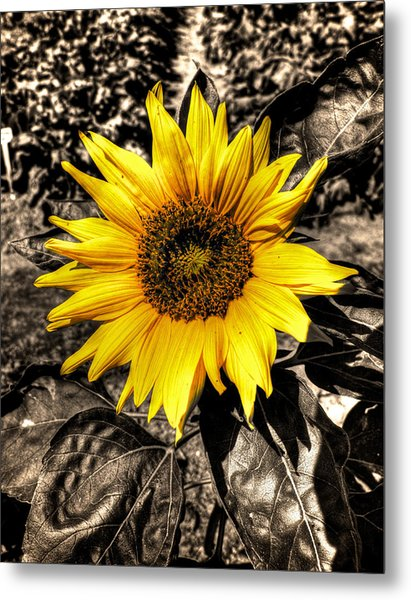 Sunny With A Chance Of Black And White Metal Print