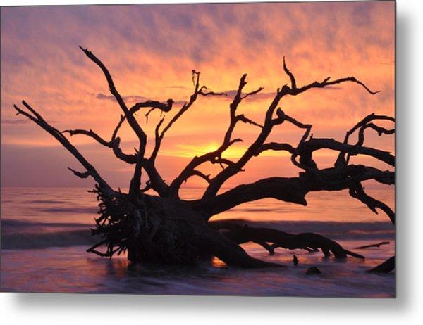 Sunrise At Driftwood Beach 6.1 Metal Print