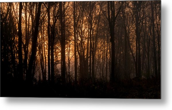 Sunrise Through Trees Metal Print by Shawn Zimmerman