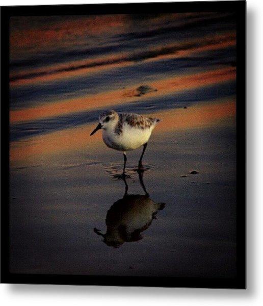 Sunset And Bird Reflection Metal Print
