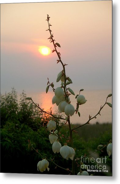 Sunset Bouquet Metal Print by Glenn McCurdy