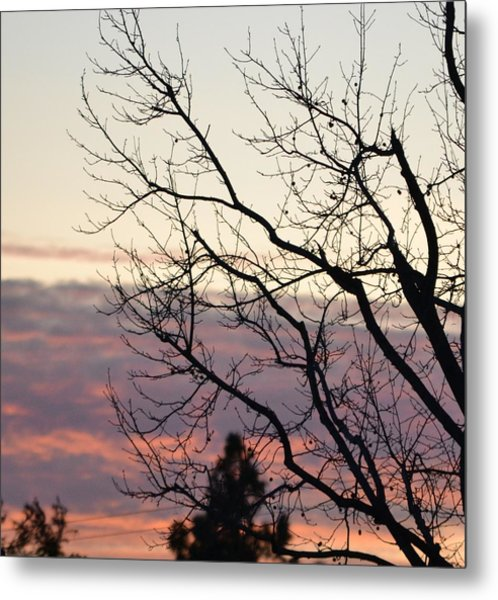 Sunset Of Winter's Beauty Metal Print by Naomi Berhane