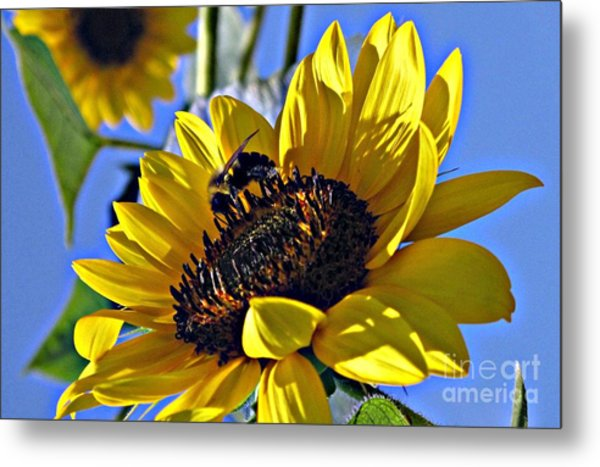 Sunshine Visitor Metal Print