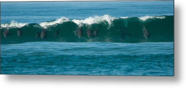 Surfing Dolphins 2 Metal Print