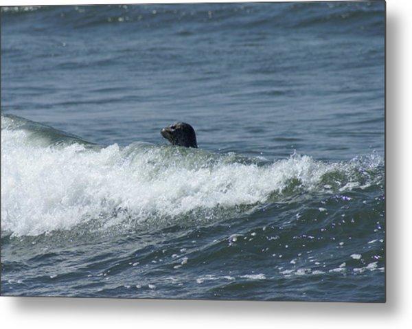 Surfing Seal Metal Print