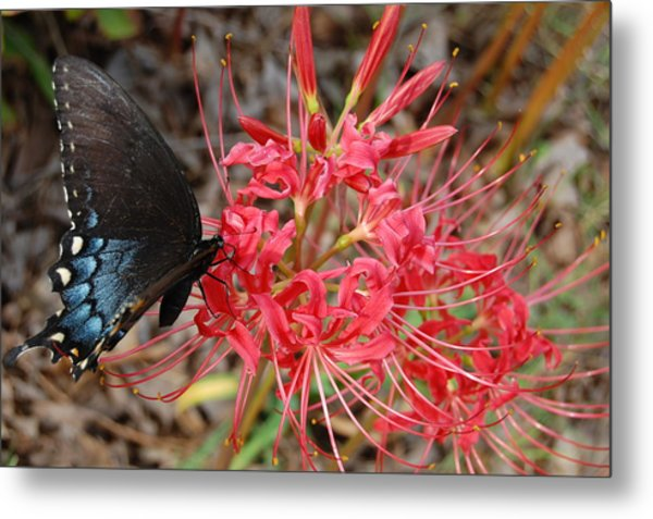 Surprise Lily Metal Print by Beverly Hammond