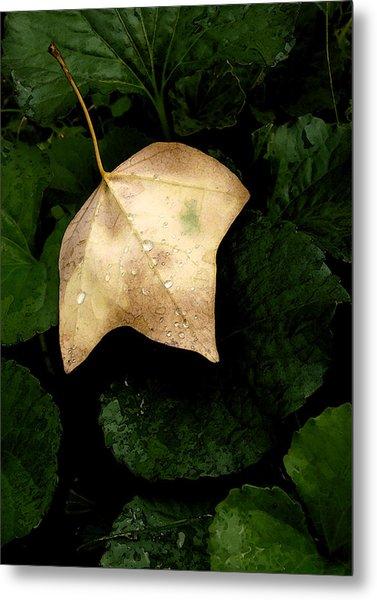 Suspended Leaf Metal Print by Glenn Donze