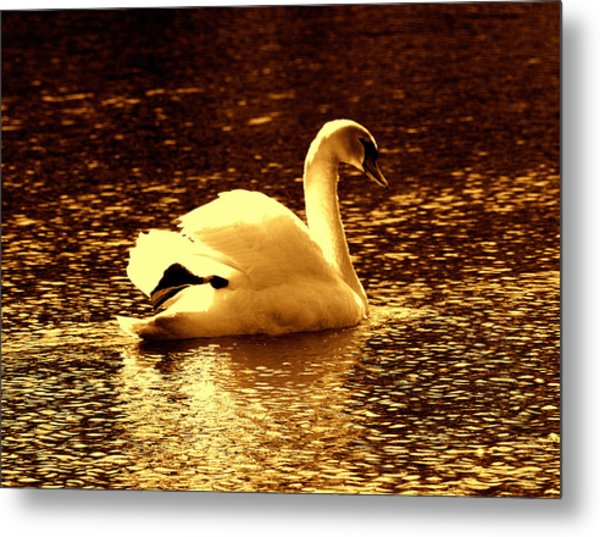 Swan Song 3 Metal Print