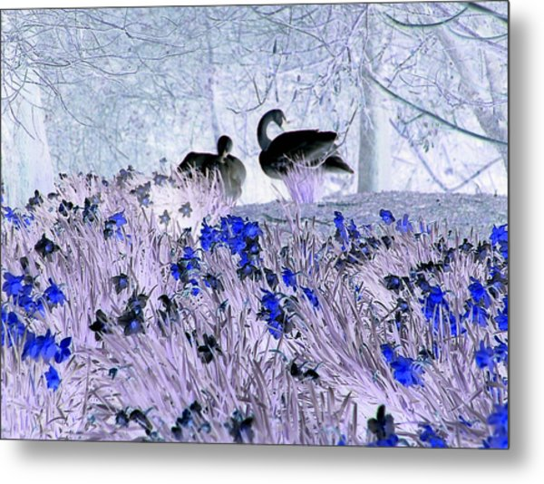 Swans In The Blue Metal Print by Fred Whalley