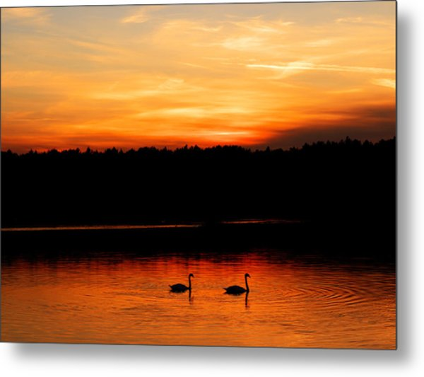 Swans In The Sunset Metal Print