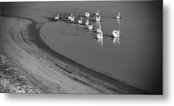 Swans On River Danube Metal Print by Tibor Puski