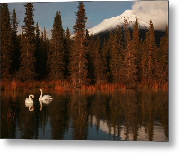 Swans Wrangell St. Elias National Park And Preserve Metal Print