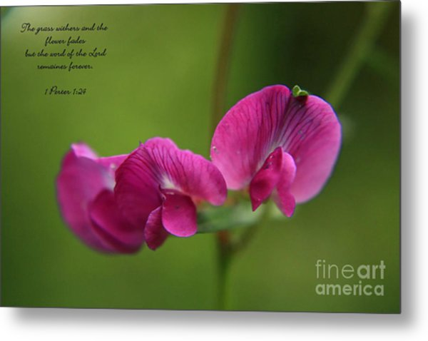 Sweet Pea Flower Metal Print