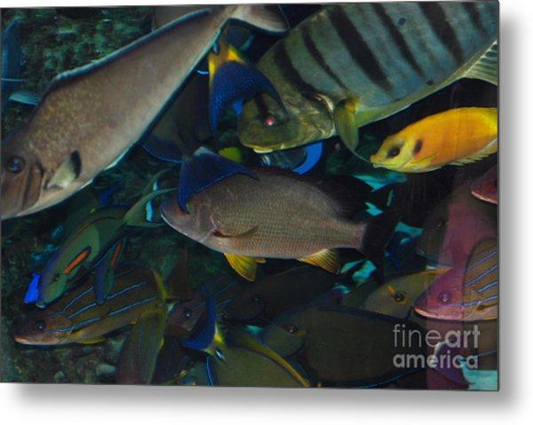 Swimming Fish Metal Print by Andrea Simon