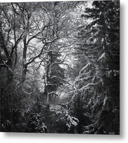 Tale Of The Trees Metal Print by Akos Kozari