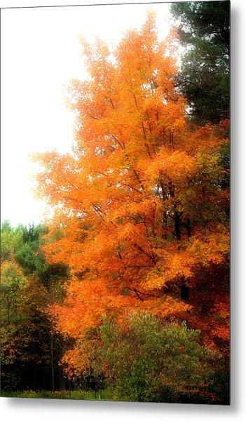 Tangerine Autumn  Metal Print by Darlene Bell