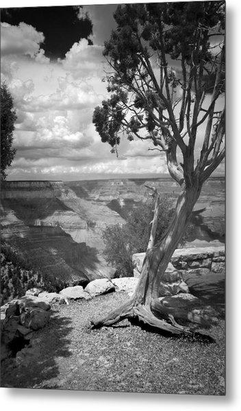 Tenacity Black And White Metal Print by Cindy Rubin