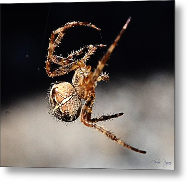 Tending The Web Invisible Metal Print