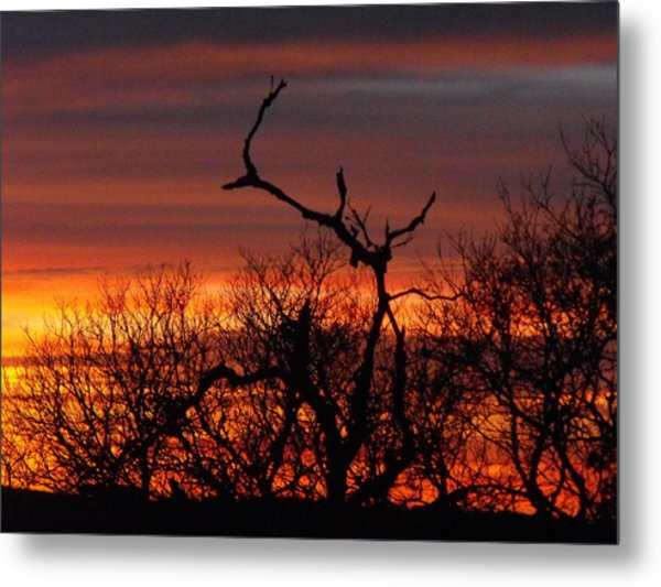 Texas Spanish Oak Tree  Sunset Metal Print by Rebecca Cearley