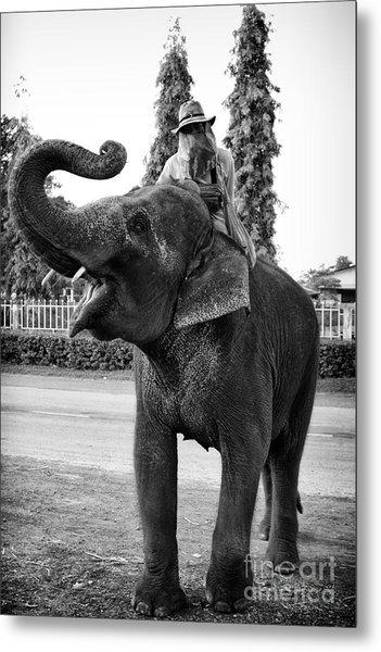 Thai Elephant Roar Metal Print
