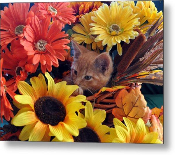 Thanksgiving Kitten Sitting In A Flower Basket Peeking Through Sunflowers - Kitty Cat In Falltime  Metal Print by Chantal PhotoPix