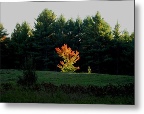 The Blazing Tree Metal Print