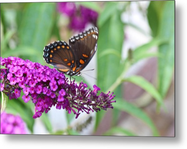 The Butterfly Tree Metal Print by Janet Mcconnell