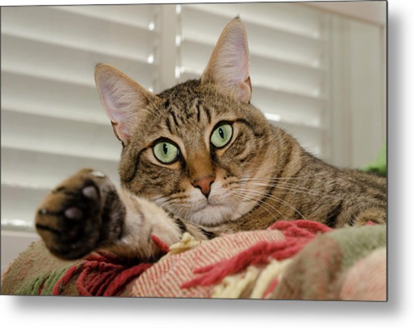 The Cat With Green Eyes Metal Print