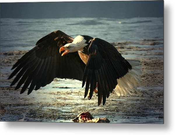 The Chase Is On Metal Print by Carrie OBrien Sibley