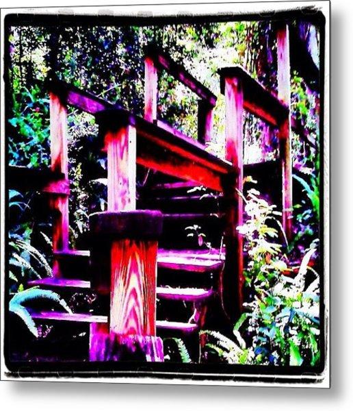 The Climb Up - At Ravine Gardens State Metal Print