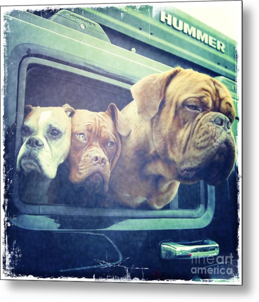 The Dog Taxi Is A Hummer Metal Print