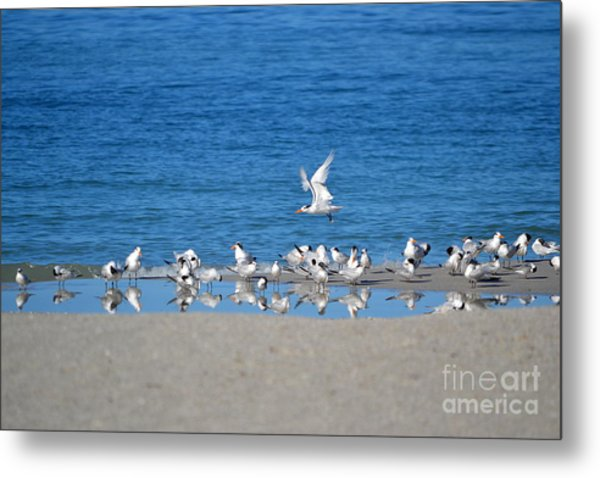 The Flock Metal Print by Brenda Alcorn