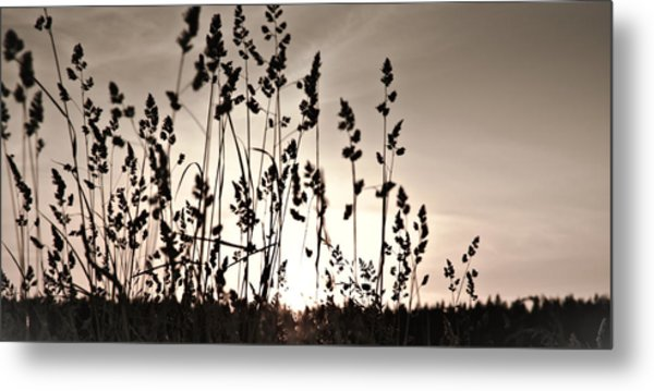 The Grass At Sunset Metal Print