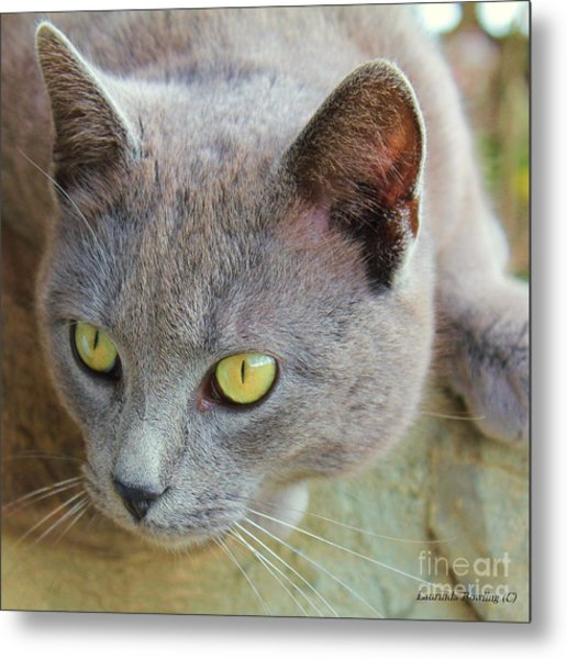 The Gray Cat Metal Print