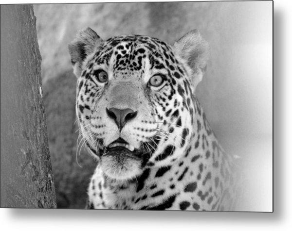 The Jaguar Spots You Metal Print