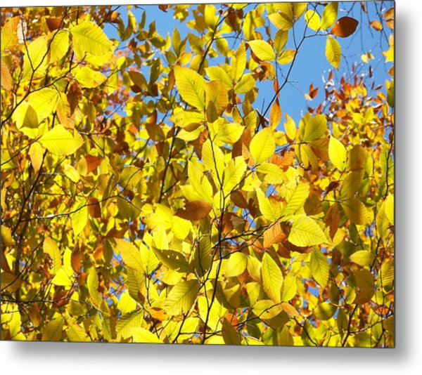 The Joy Of Autumn Metal Print