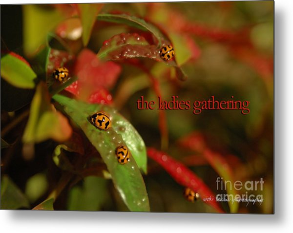 Metal Print featuring the photograph The Ladies Gathering by Vicki Ferrari