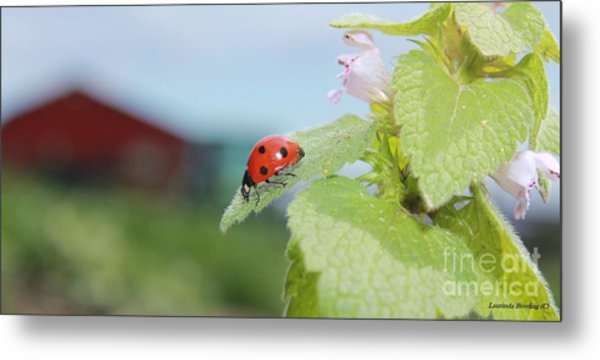 The Lady Bug  No.2 Metal Print