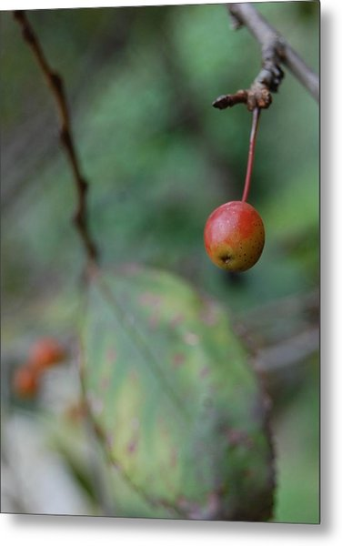 The Last Berry Metal Print by Beverly Hammond